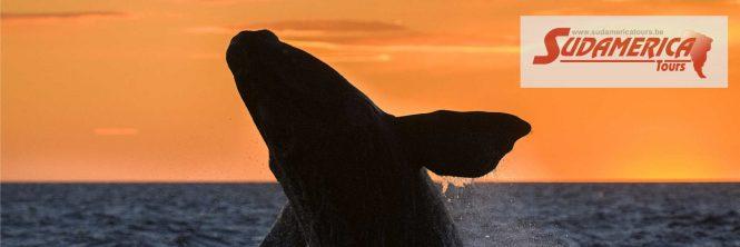 whale spotting Valdes